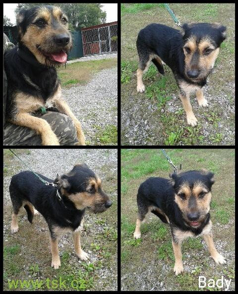 pes z útulku, kříženec, 1 rok