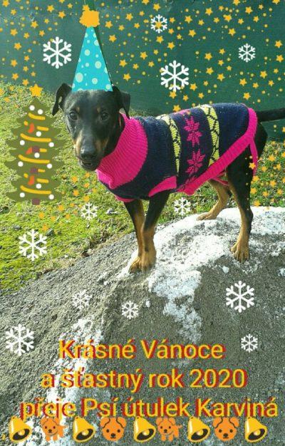 Vánoční přání z útulku