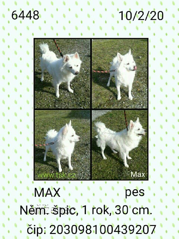 Max - pejsek, který našel nový domov