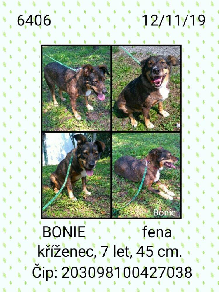 Bonie - pejsek, který našel nový domov