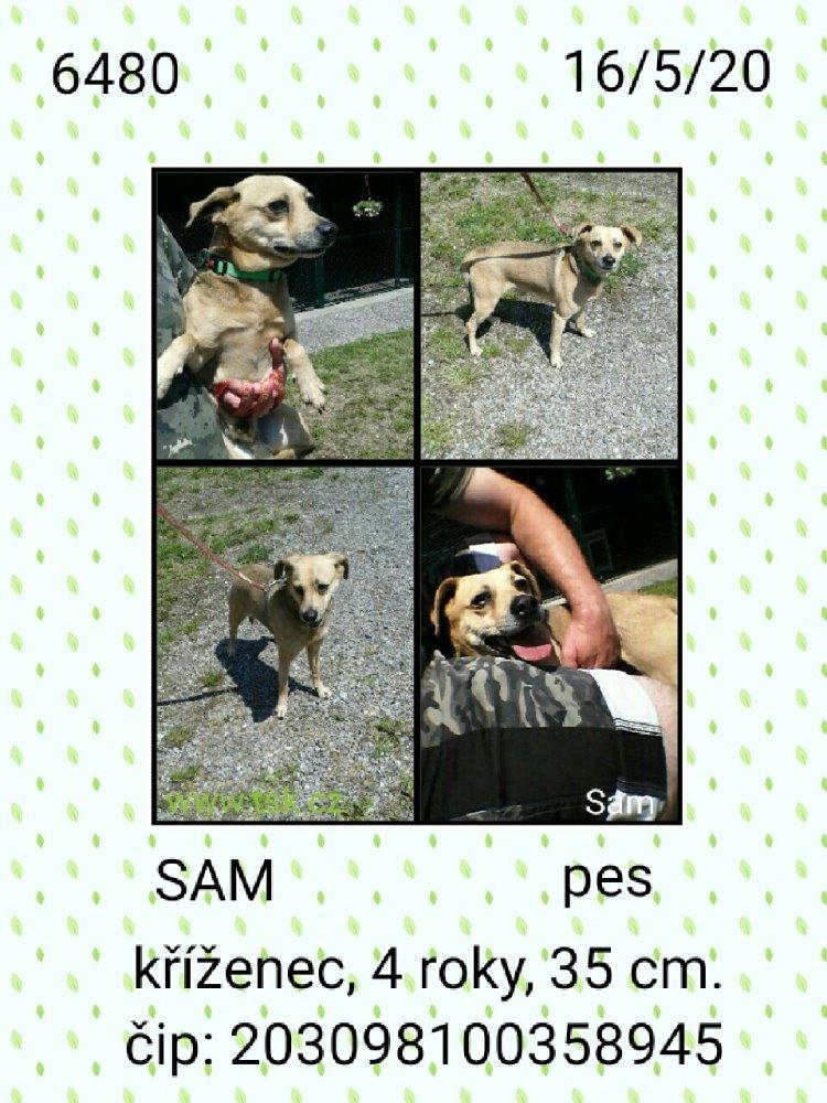 Sam - pejsek, který našel nový domov