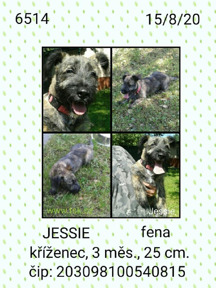 Jessie - pejsek, který našel nový domov
