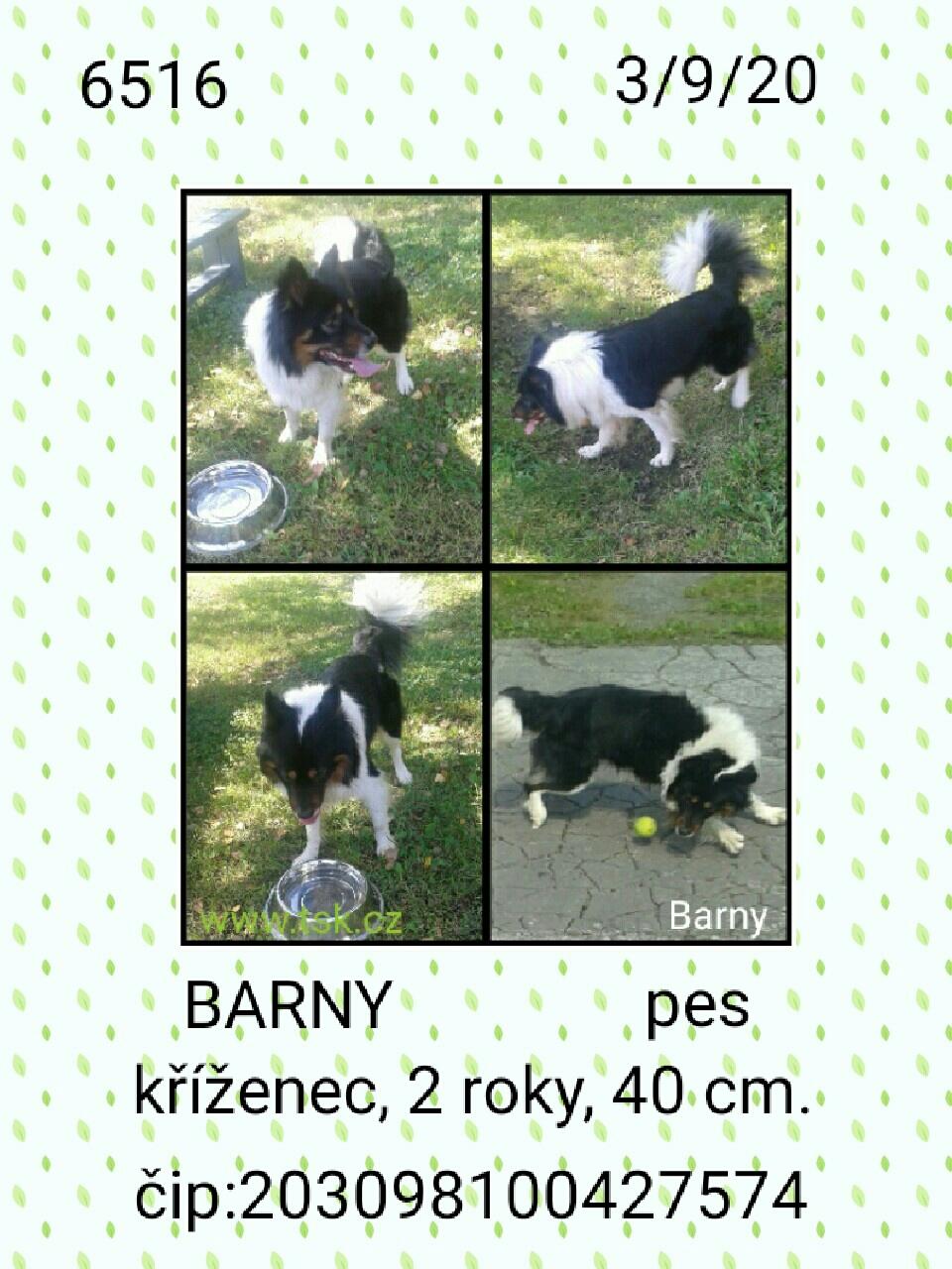 Barny - pejsek, který našel nový domov