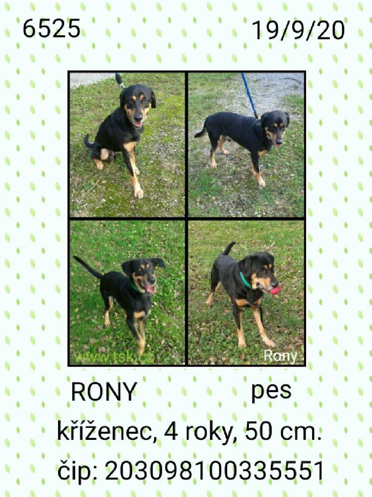 Rony - pejsek, který našel nový domov