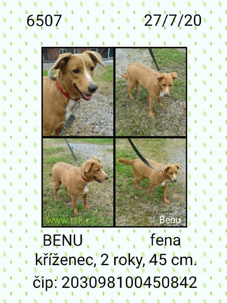 Benu - pejsek, který hledá nový domov